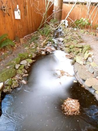 Pond Frozen Over