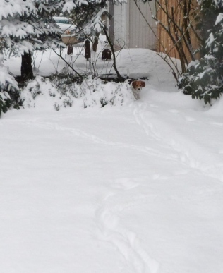 Josie scouting in snow