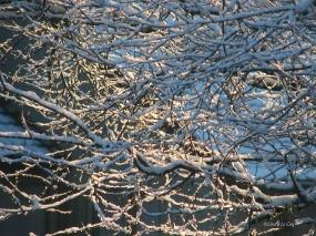 silver thaw