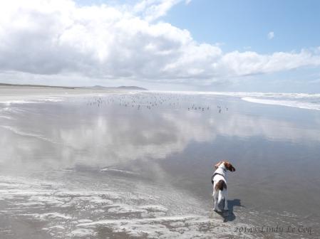 josie:beach