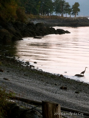 sunrise heron