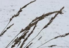 grass-on-snow
