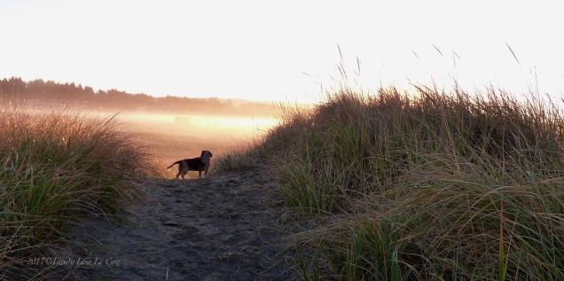 Jello at sunrise