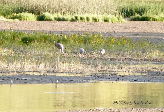 tharee cranes