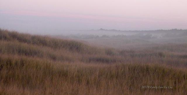 Mornning Mist