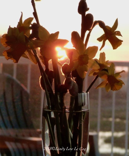 Sunset on the deck