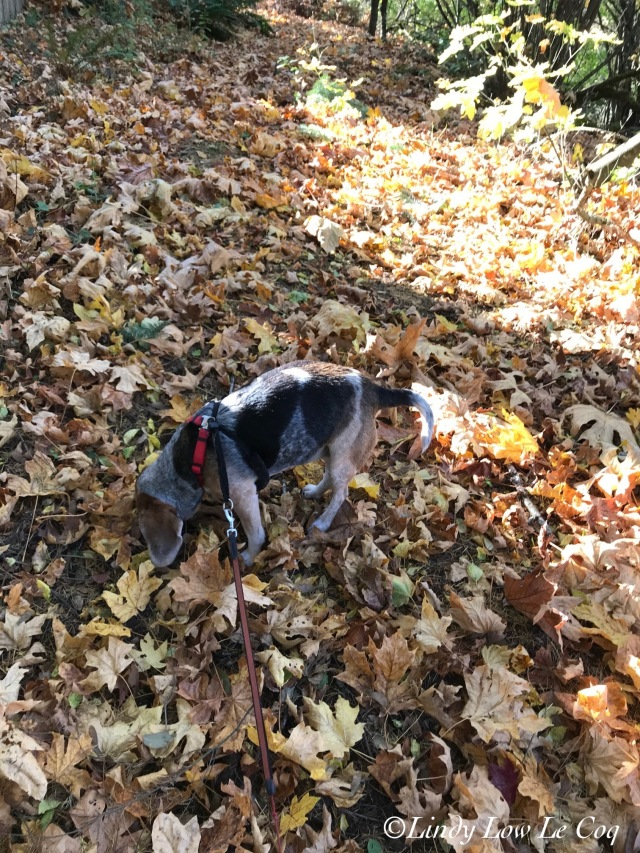 sniffing leaves