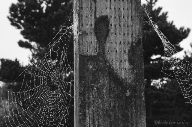 two spiderwebs copy