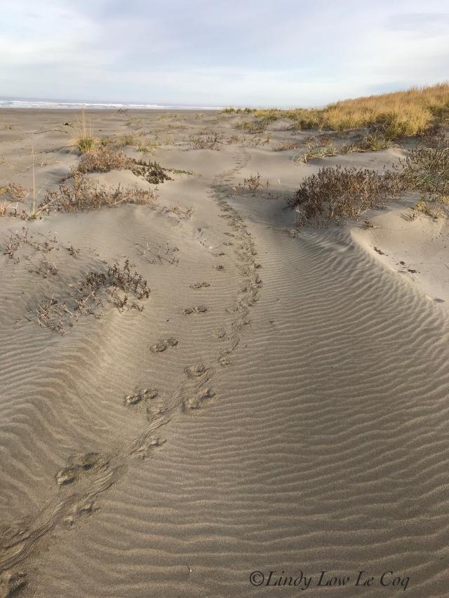 porcu trail