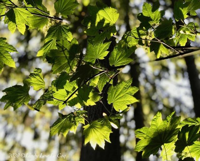 leaves 2