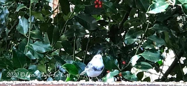 white bird 1